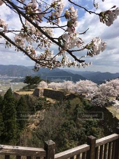 春の竹田城跡の写真・画像素材[768897]