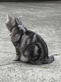 猫の写真・画像素材[418796]