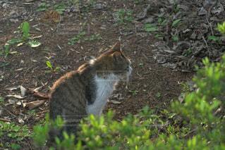 猫の写真・画像素材[458371]