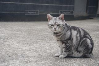 地面に座っている猫の写真・画像素材[980918]