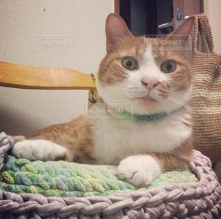 猫の写真・画像素材[539454]