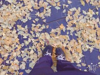 秋の写真・画像素材[419272]