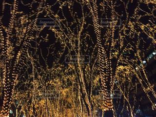 夜の写真・画像素材[422035]