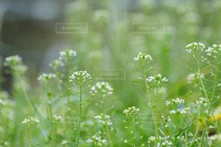 春よ来いの写真・画像素材[431511]