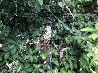 近くの枝に昆虫のアップの写真・画像素材[808635]