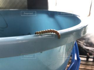 バケツの上に虫の写真・画像素材[819905]