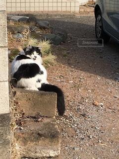 No.420941 ねこ 猫 ネコ