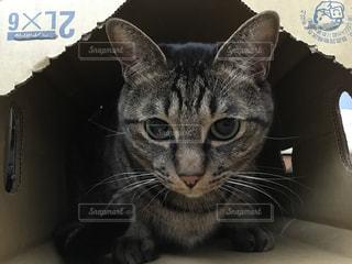 ねこ 猫 ネコ - No.420942