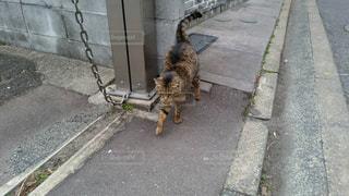 ねこ 猫 ネコ - No.420946