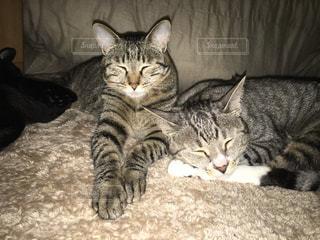 ねこ 猫 ネコ - No.420955