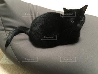 ねこ 猫 ネコ - No.427315