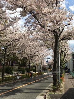春 - No.427316