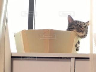 ねこ 猫 ネコ - No.429005