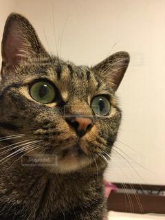 ねこ 猫 ネコ - No.429011