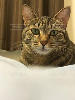 ねこ 猫 ネコ - No.429016