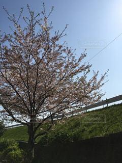 空 - No.431547
