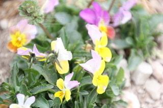 花のクローズアップの写真・画像素材[3731643]