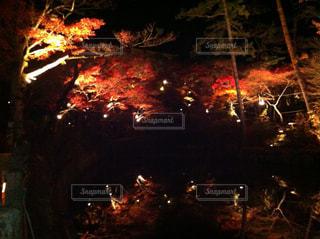 夜景の写真・画像素材[419871]