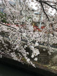 春の写真・画像素材[421180]