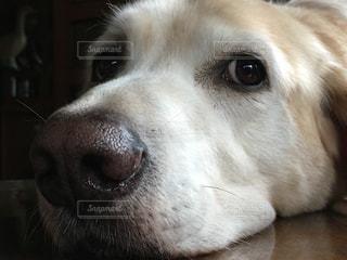 犬 - No.430338