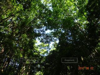 森林の写真・画像素材[521554]