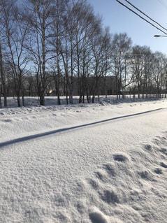 雪に覆われた道の写真・画像素材[1008600]
