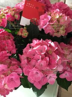 花の写真・画像素材[419939]