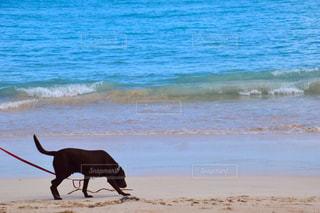 犬の写真・画像素材[445839]