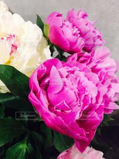花の写真・画像素材[420537]