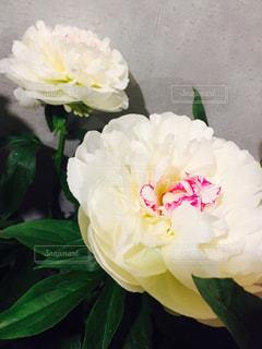 花の写真・画像素材[420538]