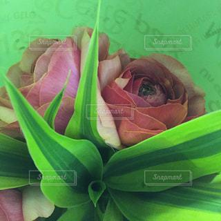 緑の写真・画像素材[420582]