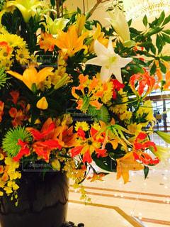 花の写真・画像素材[420713]