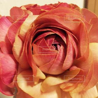 花の写真・画像素材[420996]