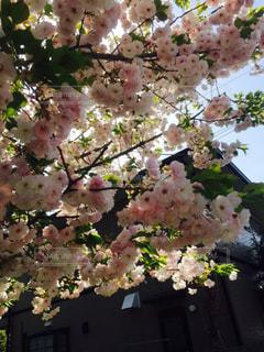 花の写真・画像素材[460184]