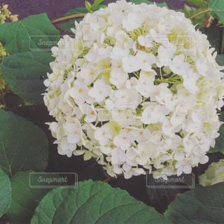 花の写真・画像素材[608504]