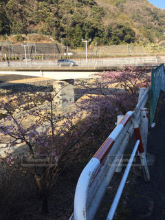 背景の山と鉄道線路のグループの写真・画像素材[814259]