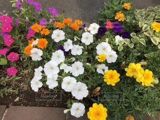 近くの花のアップの写真・画像素材[1317142]