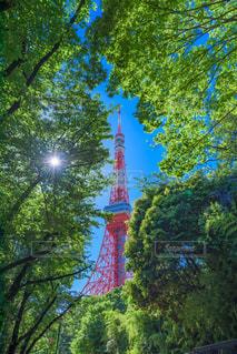 No.420653 東京タワー