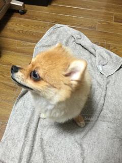 犬の写真・画像素材[420364]