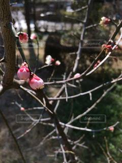 春の写真・画像素材[420806]