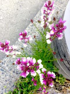 春の写真・画像素材[423607]