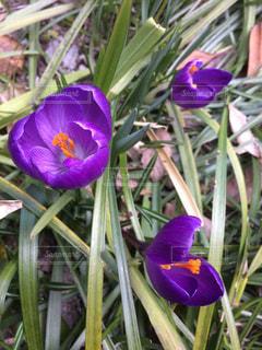 花の写真・画像素材[434521]