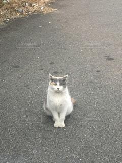 猫の写真・画像素材[420622]