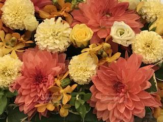 花の写真・画像素材[691578]