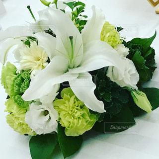 花の写真・画像素材[701315]