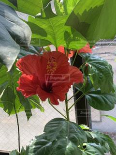 植物の花の花瓶の写真・画像素材[2179532]