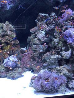 熱帯魚の写真・画像素材[1009431]