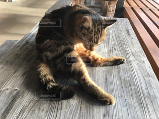 猫の写真・画像素材[420878]
