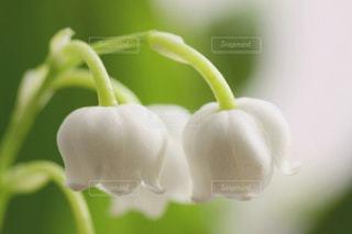 花の写真・画像素材[421009]