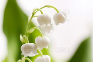 花の写真・画像素材[421010]